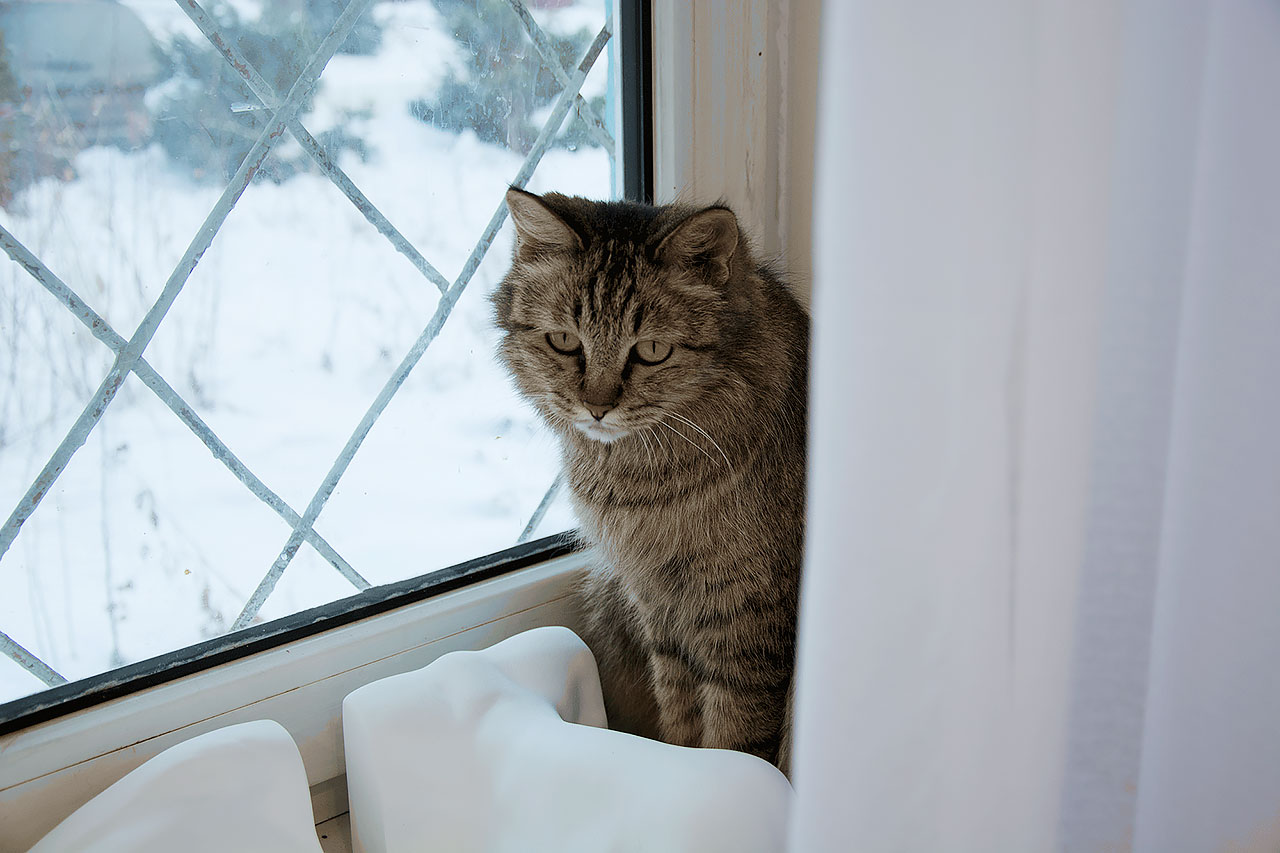 Художка. Кот
